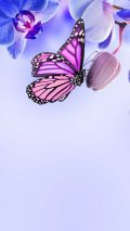 Purple Butterfly Android Wallpaper